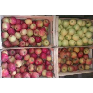 Pomme en 13kg pour compote !