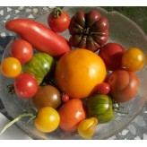 tomate variété 0.9/1.1 kg
