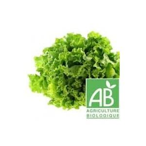 Salade Batavia 1pièce