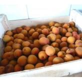 Abricot Roussillon conf. en 5 kg