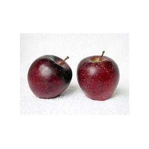 """Pomme """"noire"""""""