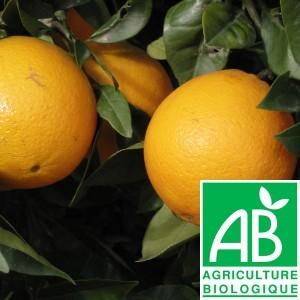 Oranges par 3/4pc